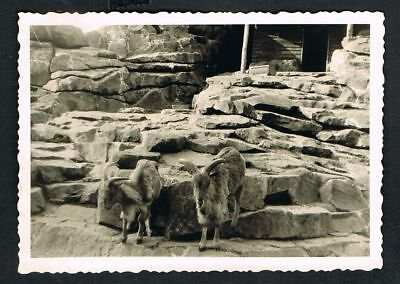 BERLIN, Foto vintage Photo, Zoo, Tierpark, /145