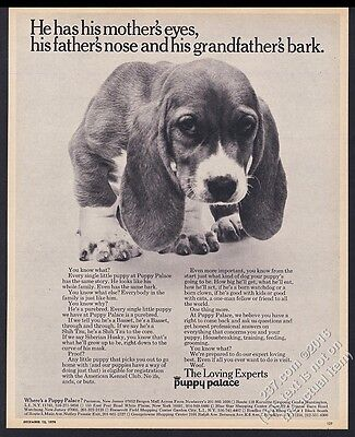 1970 Basset Hound puppy cute photo The Puppy Palace pet store vintage print ad