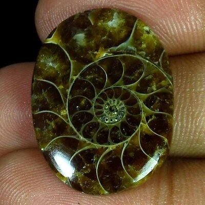 26.25 Ct 100% Natural Ammonite Cab Oval 20 X 26 Mm Glamorous Cabochon Gemstone