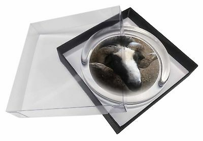 New Goat Face Glass Paperweight in Gift Box Christmas Present, GOAT-3PW