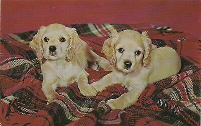 Vintage Postcard Cocker Spaniel Puppies 2 Dogs Plaid Blanket Unused Chrome