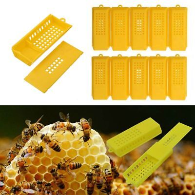 10Pcs Professional Queen Bee Butler Cage Catcher Trap Case Outil d'apiculture