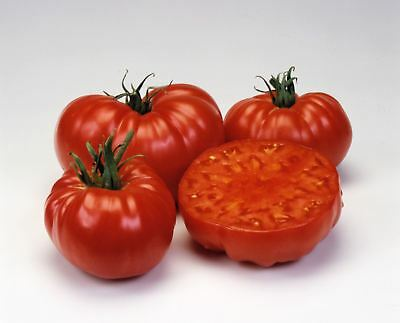Vegetable - Tomato - Pink Brandywine Improved - 100 Seeds