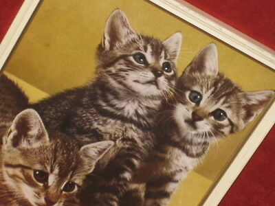 Vtg 1950s 3 ADORABLE  KITTENS / CATS  Picture IN PAINTED WOOD  FRAME W/ GLASS
