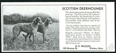 1931 Scottish Deerhound photo dog breeder vintage print ad