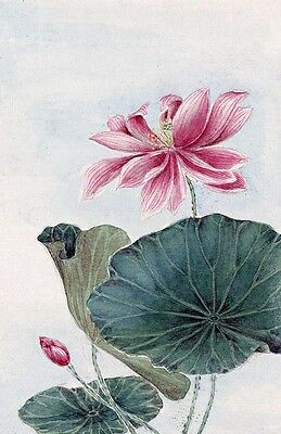 "perfect 24x36 oil painting handpainted on canvas ""lotus flowers""N3936"