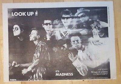 Madness Wings of a dove 1983 presseanzeige komplette Page 39 x 28 cm Poster