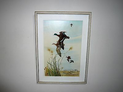 Vintage Dated 1968 Mildara Chestnut Teal Advertising Print By Robin Hill