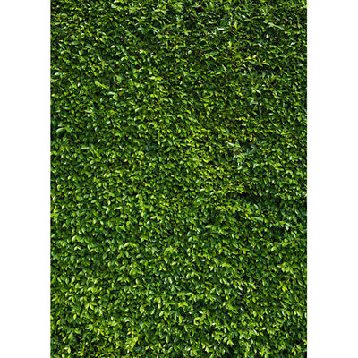 7x5ft Nature Green Grass Photo Background Studio Backdrop Decor Portable Outdoor