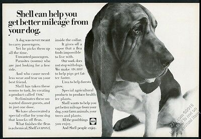 1968 Bloodhound photo Shell Oil vintage print ad