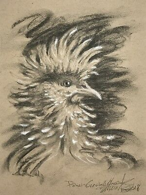 Original Charcoal drawing Polish chicken pastel chickens Signed fine Art USA
