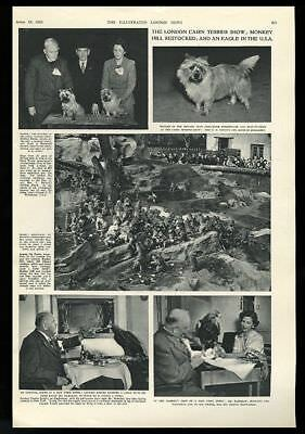 1952 Cairn Terrier dog show 2 photo & London Zoo monkey & eagle 3 photo article