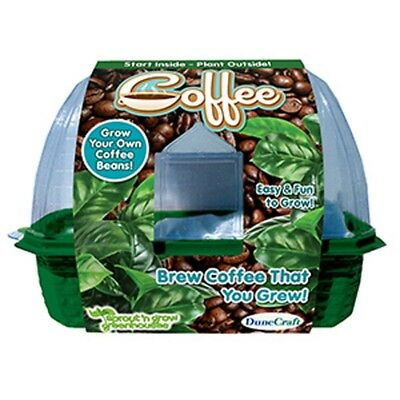 Grow Your Own Coffee - Beans Mini Greenhouse Summer Garden Toy Gift Adults