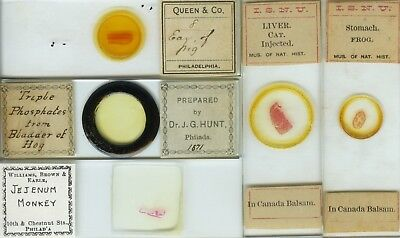 5 Animal Microscope Slides by American Makers