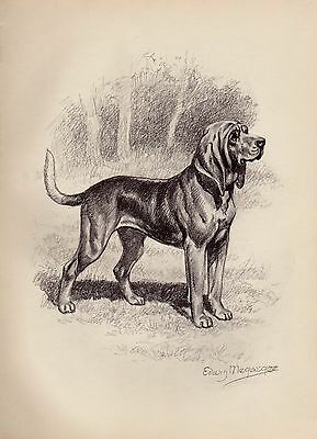 Vintage BLOODHOUND Dog Print  Beautiful 1950s Gallery Wall Art Megargee Art 2744