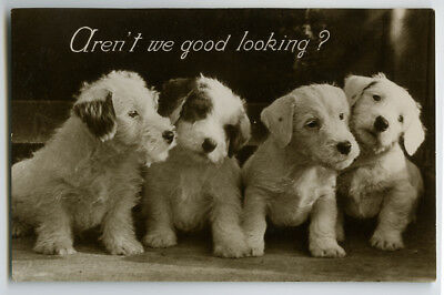 1930s Cute Puppies Puppy Dog DARLING DOGS British photo postcard