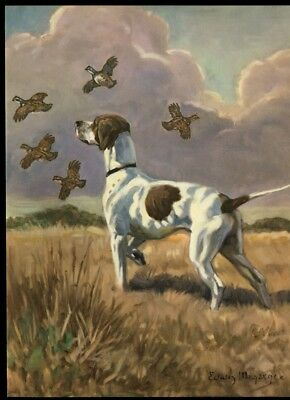 Pointer Dog: after Painting by Edwin Megargee: Authentic 1953 Book Illustration