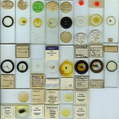 20 Fly Microscope Slides by Various Makers