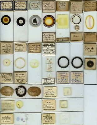 20 Plant Microscope Slides by Various Makers