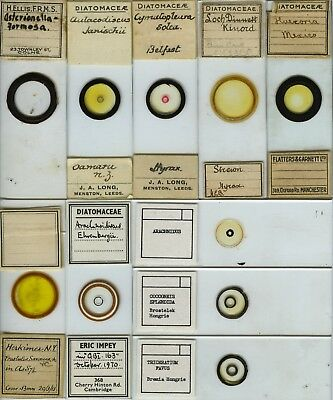 10 Diatom Microscope Slides by Various Makers