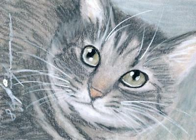 ACEO original pastel drawing grey tabby  cat by Anna Hoff