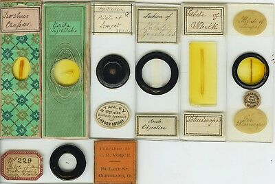 7 Mollusk Palate Microscope Slides by Various Makers