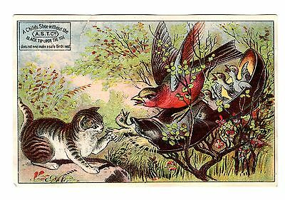 Cat and mother bird with baby birds in the shoe Trade Card