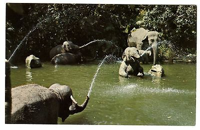 1960s DISNEYLAND ADVENTURELAND JUNGLE CRUISE ELEPHANT BATHING POOL~NMMT POSTCARD
