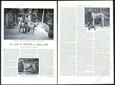 1920 Irish Wolfhound 6 photo breed history and profile vintage print article