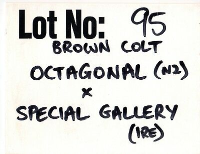 1999 First Octagonal Yearling Colt Sold Memorabilia- Octagonal X Special Gallery