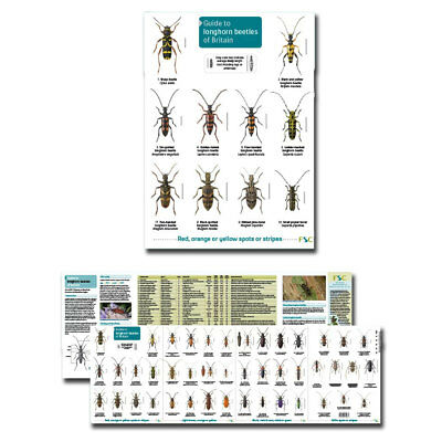 Guide to the Longhorn Beetles of Britain Laminated Fold out Identification Chart