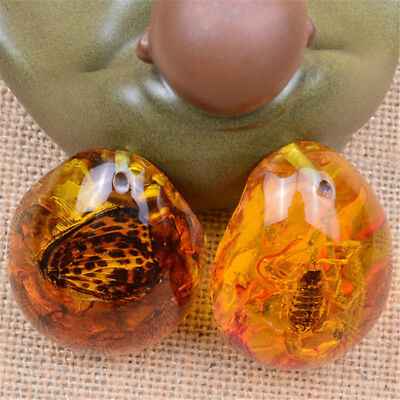 New Resin Amber Scorpion Crabs Ants Spider Insect Stone Pendant Necklace Gift HF