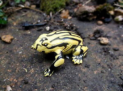 NEW Science & Nature Corroboree Frog - authenticated by Healesville Sanctuary