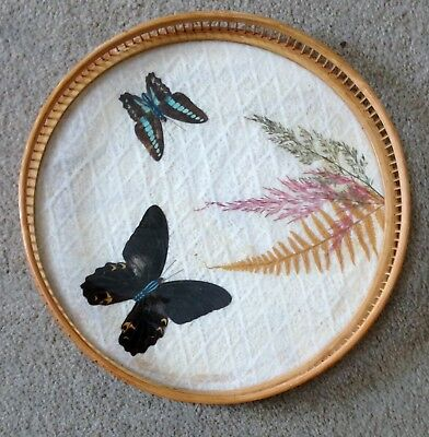 "Vintage  Wicker Bamboo Real Pressed Butterfly 11"" Serving Tray"