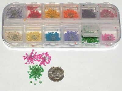100's of super tiny dried flowers KIT 12 color Mixed Miniature for glass bottle*