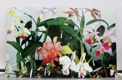 Hawaii HI Hawaiian Islands Orchids to You Postcard Old Vintage Card View Post PC