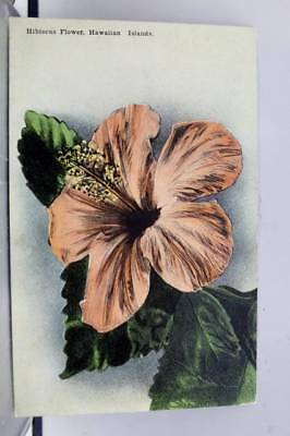 Hawaii HI Hibiscus Flower Postcard Old Vintage Card View Standard Souvenir Post