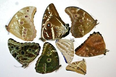 8 Mixed Morphos in A1 condition