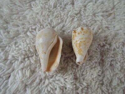 Sea Shell Clip-on Earrings (A37)
