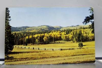 Utah UT Beaver Big John's Flat Delano Belknap Postcard Old Vintage Card View PC