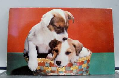 Animal Dog Puppy Fox Terrier Pups Morehead City North Carolina Postcard Old View