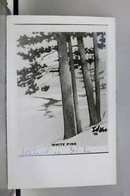 Idaho ID White Pine Postcard Old Vintage Card View Standard Souvenir Postal Post