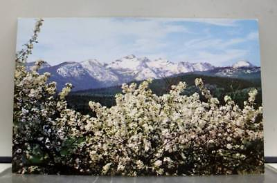 Scenic Bitterroot Valley Apple Blossoms Como Peaks Postcard Old Vintage Card PC