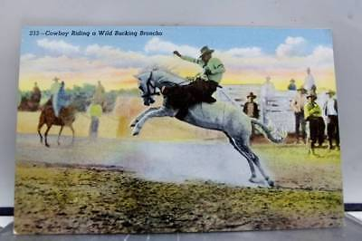 Scenic Cowboy Riding Bucking Broncho Postcard Old Vintage Card View Standard PC