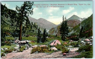 MINERAL KING, Tulare County, California  CA   MOUNTAIN MEADOWS  c1910s  Postcard