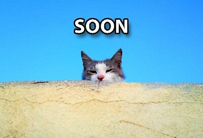 Funny Cat Meme Refrigerator Magnet (3 x 2) SOON Peaking Roof Sky Collectible