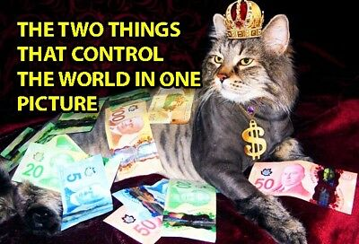 Funny Cat Meme Refrigerator Magnet (3 x 2) Queen Money Control World Collectible