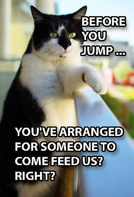 Funny Cat Meme Refrigerator Magnet (2 x 3) Before Jump Feed Us Balcony Metal