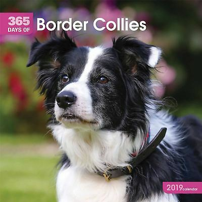 Border Collies 365 Days Official 2019 Wall Calendar New & Sealed