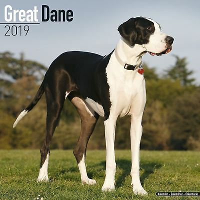 Great Dane Official 2019 Wall Calendar New & Sealed